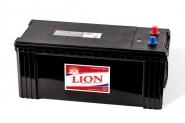 Lion-491