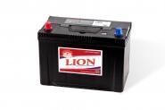 Lion-482